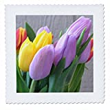 3drose QS _ 33741 _ 1 Ostern Farben tulips-flowers-floral