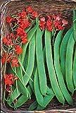 """Premier Seeds Direct Feuerbohne """"Prizewinner"""" beinhaltet 35 feinste Samen"""