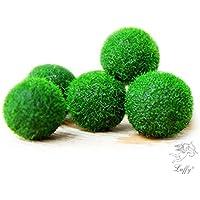 5 mini piante acquatiche a palla Marimo, piante acquatiche vive per la vasca dei pesci dell'acquario