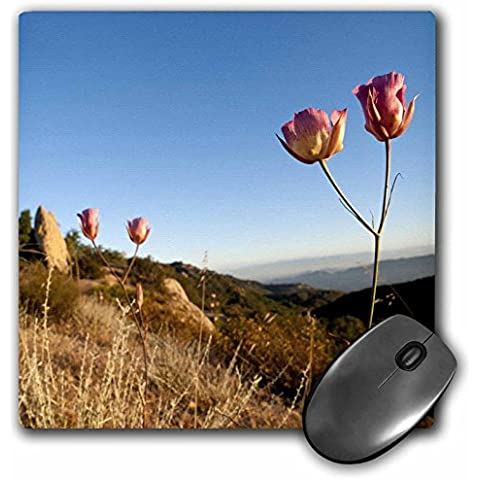 Danita Delimont - Flowers - Mariposa lily flower, Santa Monica Mountains, CA - US05 RSP0035 - Rob Sheppard - MousePad (mp_88626_1)