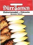 Salatsamen - Zichoriensalat - Chicorée (Brüsseler Witloof) von Dürr-Samen