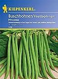Buschbohnen 'Prinzessa',1 Portion