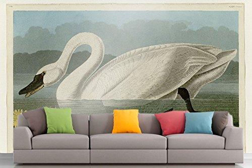American Swan (The Museum Outlet Roshni Arts®-kuratierte Art Wall Mural-Audubon (- Gemeinsame American Swan-Plate 411| selbstklebend Vinyl Ausstattung Décor Art Wand-121,9x 91,4cm)