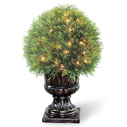 National Tree LCY4-304-27 Upright Juniper Ball Topiary Tree in a Decorative Urn with 70-Clear Lights, 27-Inch by National Tree Company -