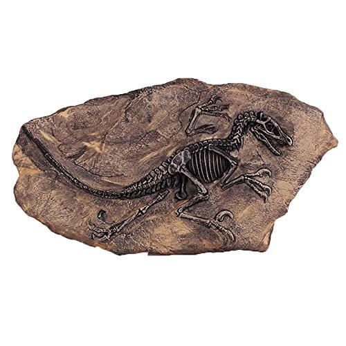 ier Sammler Dekor Modell Spielzeug Lebensechte Dinosaurier Skelett Haken Simulation Fossilien Harz Wand Personalisierte Geschenk Ornamente Dekoration ()