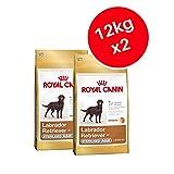 Royal Canin sterilisiert Labrador Retriever Erwachsene, Trockenfutter für Hunde 12kg (2Stück)