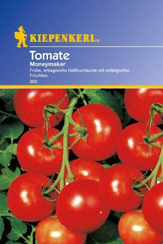 Tomaten, 'Moneymaker'