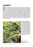 Die Wald-Apotheke: Bäume, Sträucher und Wildkräuter, die nähren und heilen - Dr. Markus Strauß