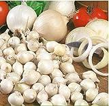 Acecoree Samen- 100 Stück Steckzwiebel Samen Bio Zwiebel Saat mehrjährig Zwiebel Gemüsesamen Hausgarten Pflanzen Allium Süß-fruchtige Gemüse Saatgut
