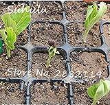 FERRY Semillas de Alto Crecimiento Solo no Las Plantas: Semillas Cushy-10 Semillas/Bolsa importada Baobab (Onia digitata) Seed s Outerdoor Semillas Bonsai Semillas orgánicas Crecen rápido 4