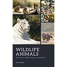 Wildlife Animals Picture: 100+ Pictures of Wild Animals around the World for Exploring, Relaxation and More