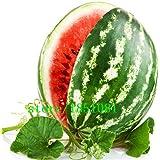 semillas de frutas de promoción de grandes 20 PC gigante sandía Semillas de enormes 200 libras, jardinería doméstica,!