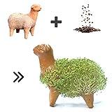 Anzuchtset für Keimsprossen & Keimlinge aus Chia Samen - Chia Pets bzw. Chia Tiere - 100% handgemachte Tonfigur als Geschenk für Kinder & Freunde - inkl. Samen zum natürlichen Keimen (Schaf)
