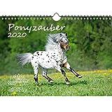 Ponyzauber DIN A4 Kalender 2020 Pony und Fohlen - Seelenzauber