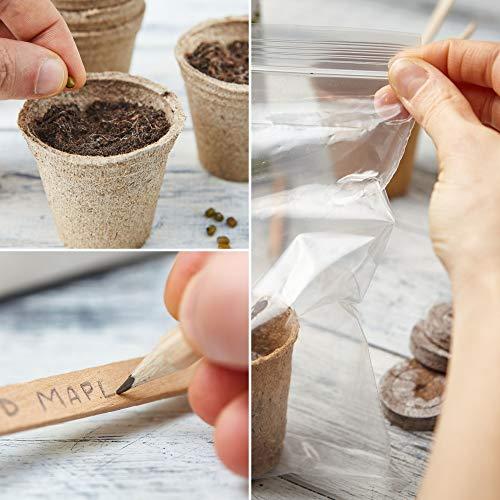 Zoom IMG-3 kit bonsai per crescere il