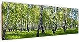 Feeby, Wandbild, Deco Bild, gedrucktes Bild, Deco Panel, Bild, Panoramabild 30x90 cm, WALD, BÄUME, GRAS, NATUR, GRÜN, WEISS