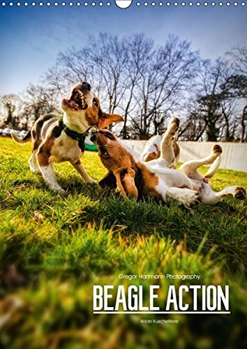 Beagle Action - Wilde Kuscheltiere (Wandkalender 2018 DIN A3 hoch): Beagles beim Spielen (Monatskalender, 14 Seiten ) (CALVENDO Tiere) [Kalender] [Apr 13, 2017] Hartmann, Gregor (Beagle-kalender)