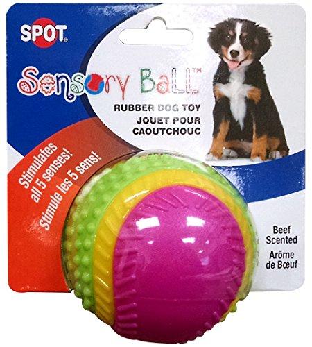 ethischen Sensory Ball Hund Spielzeug -