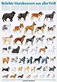 Schreiber Naturtafeln, Beliebte Hunderassen aus aller Welt
