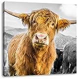Niedlicher Blick einer Kuh an der Weide B&W Detail, Format: 40x40 auf Leinwand, XXL riesige Bilder fertig gerahmt mit Keilrahmen, Kunstdruck auf Wandbild mit Rahmen, günstiger als Gemälde oder Ölbild, kein Poster oder Plakat