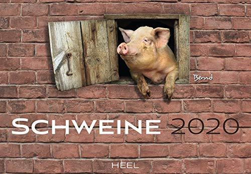 Schweine 2020: Der Sympathische Schweine-Kalender mit den charmanten Namen