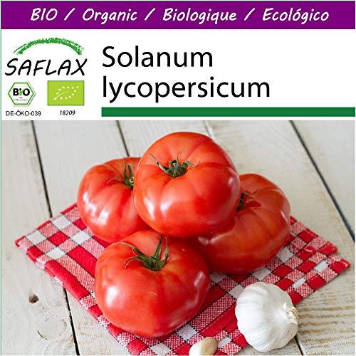 SAFLAX - Big Garden - BIO - Tomate - Saint Pierre - 15 Samen - Mit Gewächshaus, Töpfen, Anzuchtsubstrat und Dünger - Solanum lycopersicum