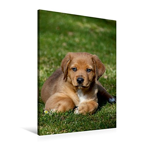 Wandbild Hundewelpen Hund