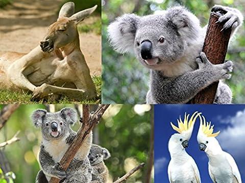 Set de cartes «australie (4 cartes postales de koala et
