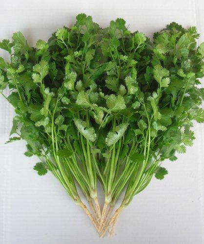 Il vous suffit de graines fines herbes???Coriandre Vert Aroma???Coriandrum Sativa 'Vert Aroma'???100?graines Petit Lot