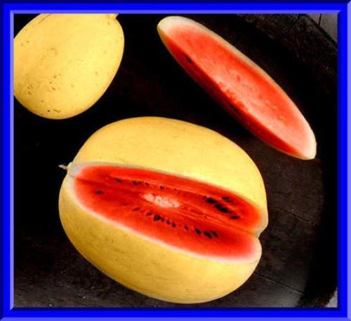 Goldene Midget Wassermelone Samen! Schwer zu finden und sehr lecker!