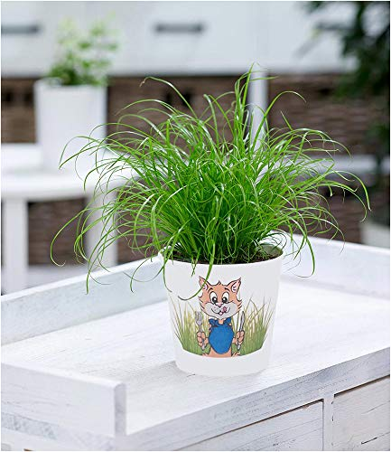 Gräser 3 Pflanzen