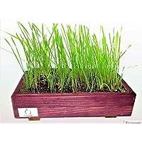 erba per gatto (Kit porpora)ADES