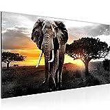 Bilder Afrika Elefant Wandbild Vlies - Leinwand Bild XXL Format Wandbilder Wohnzimmer Wohnung Deko Kunstdrucke Gelb Grau 1 Teilig -100% MADE IN GERMANY - Fertig zum Aufhängen 001212c