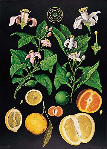 zitrus-lehrtafel-dekoposter-85-cm-x-120-cm-wanddekoration-poster-naturtafel