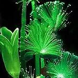 TOPmountain Emerald Fluorescent Blumensamen 100 Stück Nachtlicht Pflanzen für Zuhause Garten Bonsai Samen