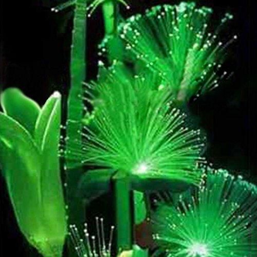 SSXY Smaragd Fluoreszierende Blumensamen Nacht Licht Emittierende Pflanzen Leuchtende Smaragd Samen Seltene Bonsai Pflanzen, 100 Teile/Paket - Teile Seltene