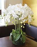 PLANT&STYLE Künstliche Orchidee Phalaenopsis in 'Erde', 70cm, Real Touch, Weiß