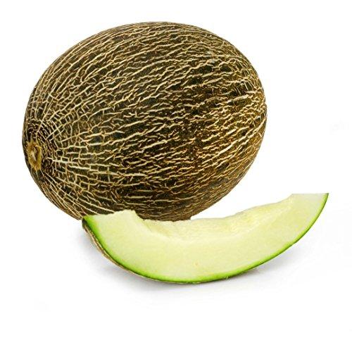 green-melon-santa-claus-christmas-melon-piel-de-sapo-cucurbitaceae-seeds-50-pcs