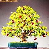 SANHOC Grande Vendita! 10pcs Nano Albero Bonsai ciliegio Reale Verde Frutta Sano Vaso di Frutta perenne Piante da Giardino di casa Il Trasporto Libero: 50pcs