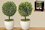 Künstliche Zimmerpflanze Gartendeko Buchsbaum klein mit Topf 2er Set Kunststoff 13 cm grün / weiß
