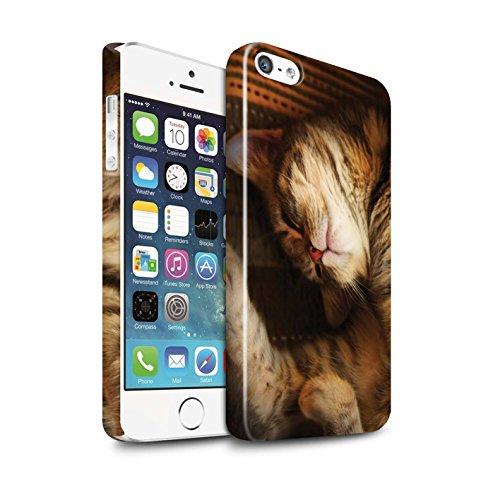 Officiel Elena Dudina Coque / Clipser Brillant Etui pour Apple iPhone SE / Trois dans la Nuit Design / Les Animaux Collection Endormi/Tigré Chat