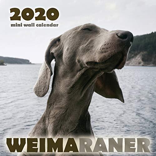 Weimaraner 2020 Mini Wall Calendar