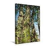 Premium Textil-Leinwand 30 cm x 45 cm hoch, Ein Motiv aus dem Kalender Bilder aus dem Chaco in Paraguay | Wandbild, Bild auf Keilrahmen, Fertigbild ... Junge Flaschenbäume (CALVENDO Natur)