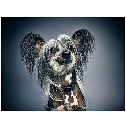 LYDXD DIY Diamant Malerei 5D Kreuzstich Chinese Crested Dog Mosaik Strass Diamant Stickerei Wohnkultur 40x50cm -