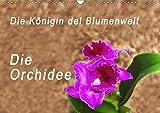 Die Königin der Blumenwelt, die Orchidee (Wandkalender 2019 DIN A3 quer): Bilder der Orchideen Weltausstellung in Guayaquil, Ecuador (Monatskalender, 14 Seiten ) (CALVENDO Natur) - Peter Rosenthal