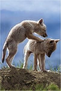 Schmidt Spiele  - Discovery Channel jóvenes Coyotes, 500 Piezas