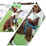 GBX Herausreisen Haustierbedarf Haustier Brustgurt mit Golden Retriever Leine Große Hundeleine Puppy Chain Supplies Verstellbare Träger,Schwarz und grün,S (30-42 cm)