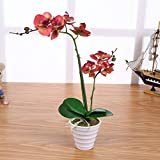 Künstliche Orchidee Rot mit 2 Rispen 40cm I ECHT WIRKEND I Phalaenopsis Kunstblume im Topf I Orchidaceae STAR-LINE®