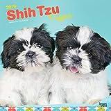 Shih Tzu Puppies - Shih Tzu Welpen 2019 - 18-Monatskalender mit freier DogDays-App (Wall-Kalender)
