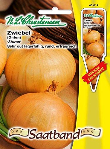 Zwiebel 'Sturon' GS Saatband gesund, sehr gute Lagereignung ( mit Stecketikett) ' Onion 'Allium cepa'